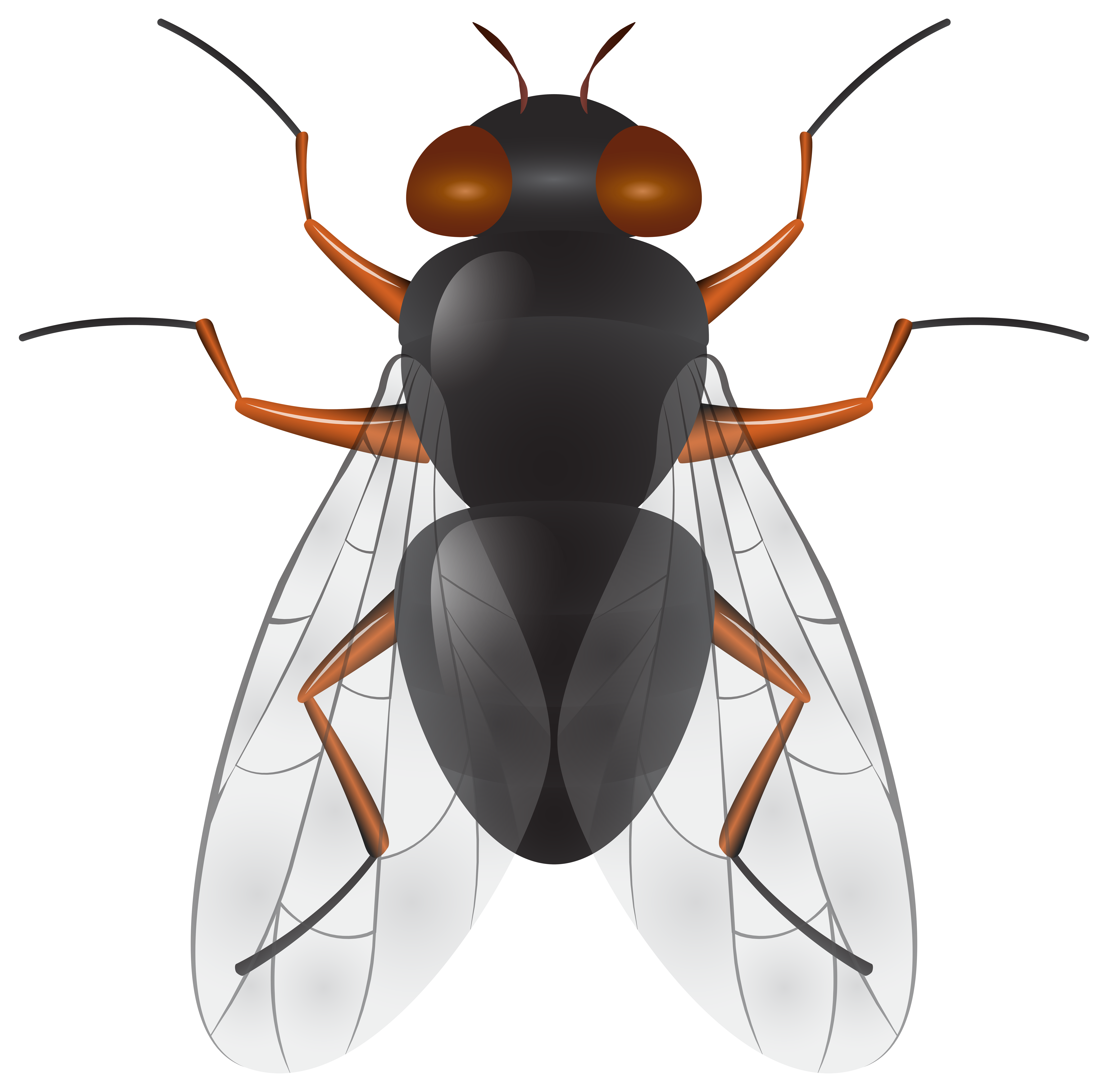 Firefly clipart flying. Fly png clip art