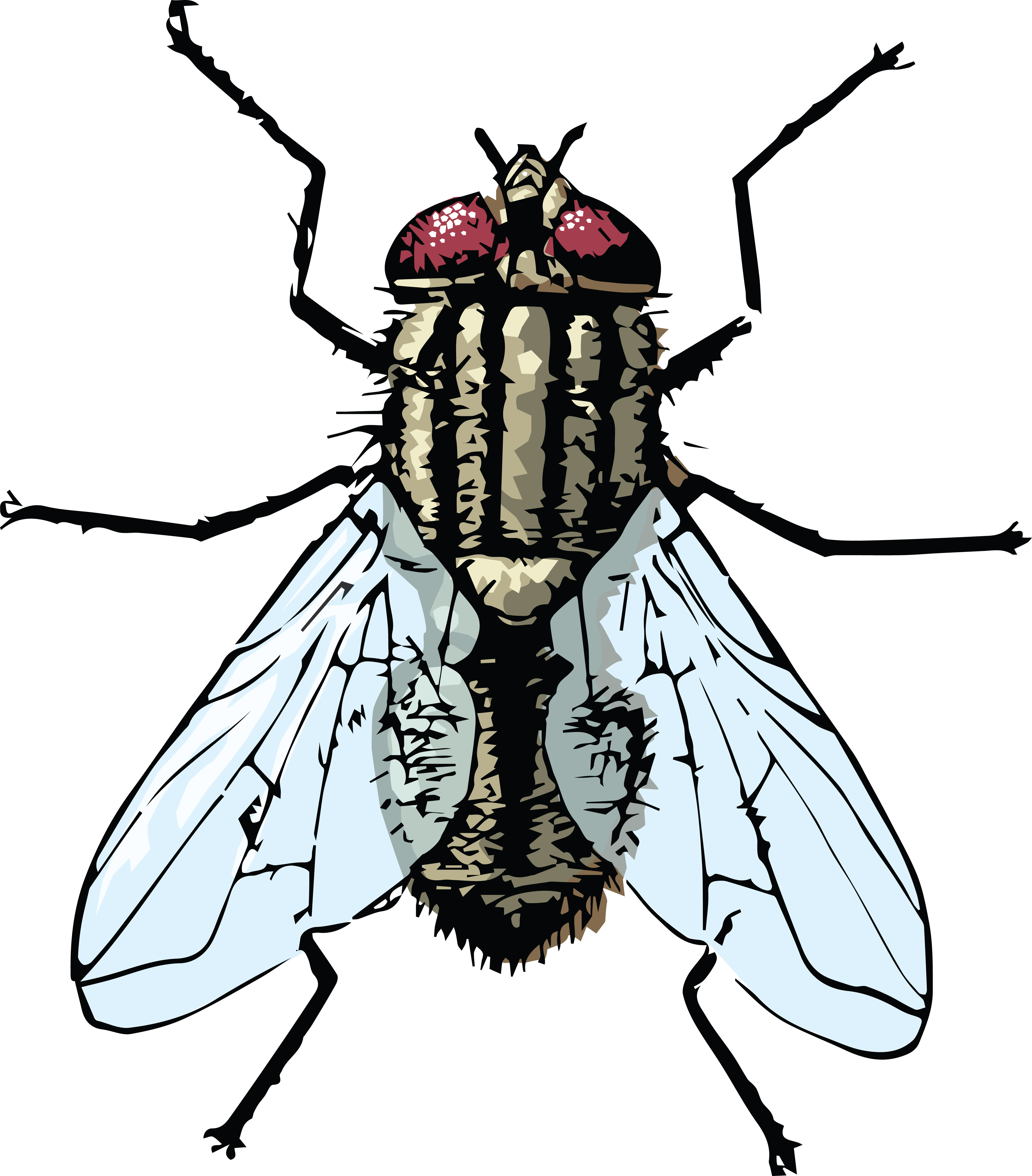 Flies clipart house fly.  clipartlook