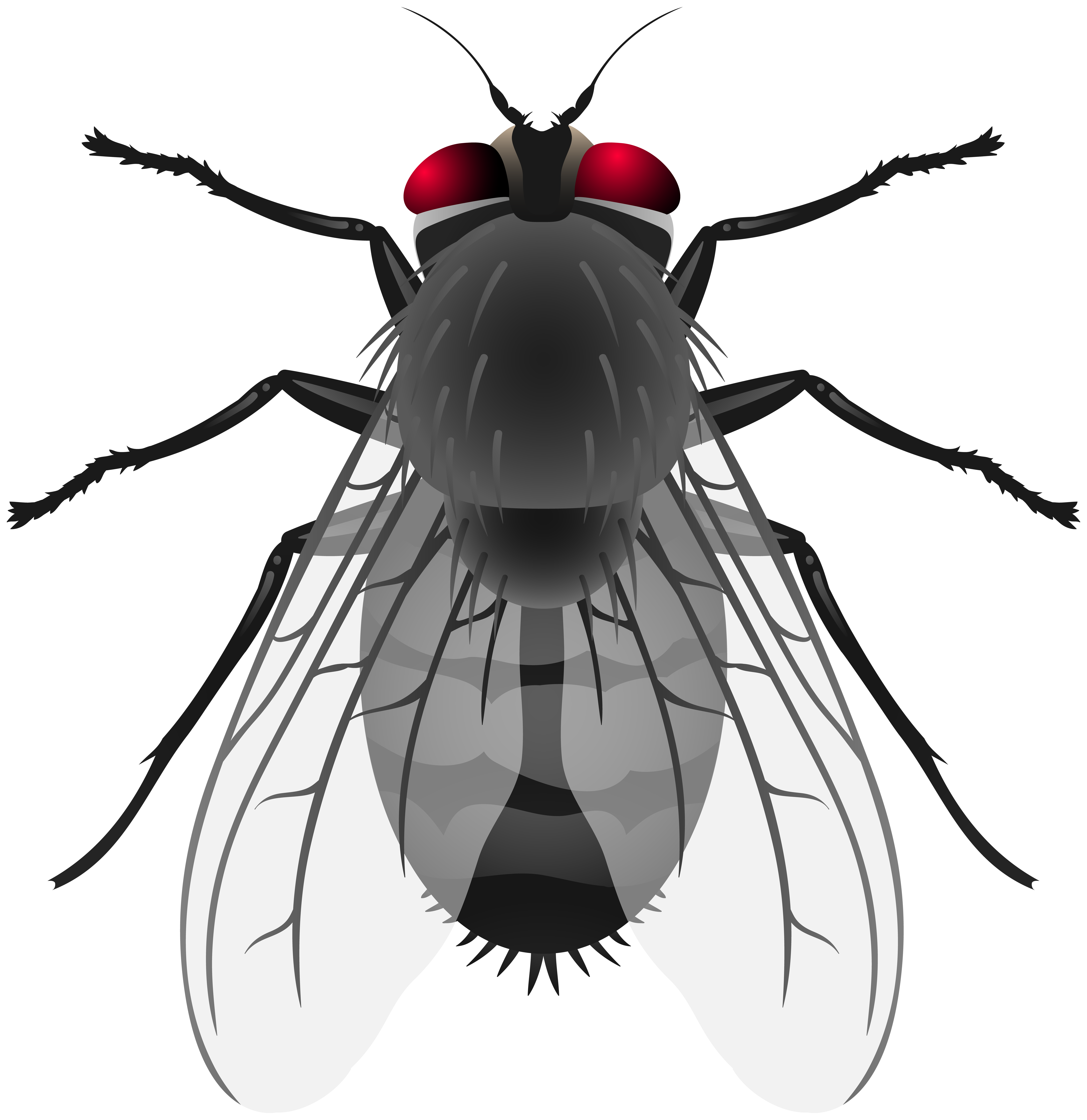 Fly clipart. Png clip art best
