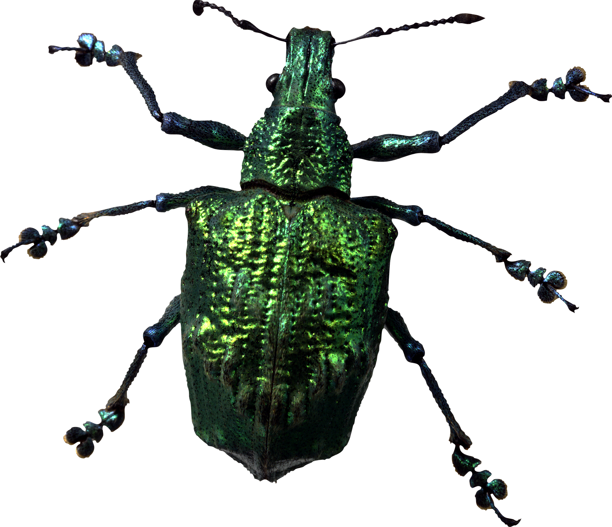 Png transparent images all. Insects clipart green insect
