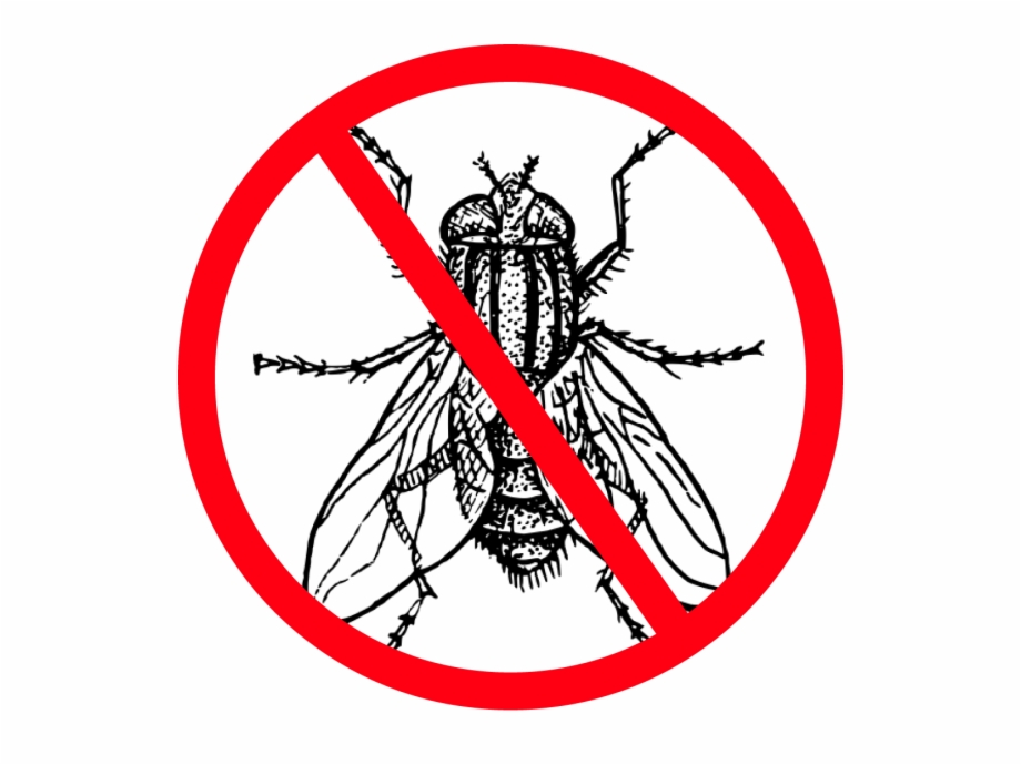 Fly clipart harmful insect. Flies colouring picture of