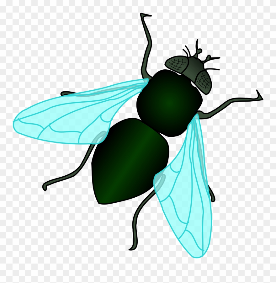 fly clipart house fly