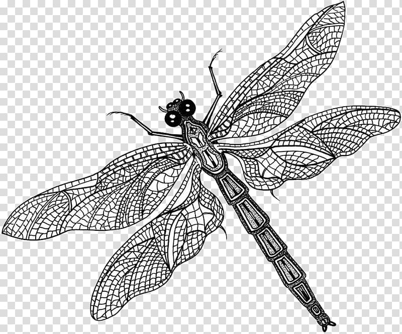 Butterfly what is an. Fly clipart insect wing
