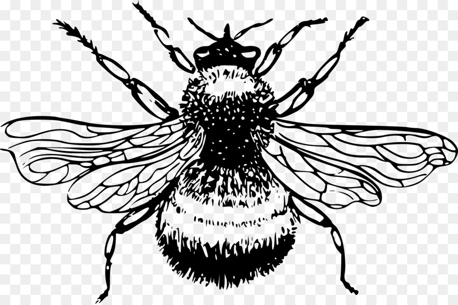 Fly clipart insect wing. Black and white flower