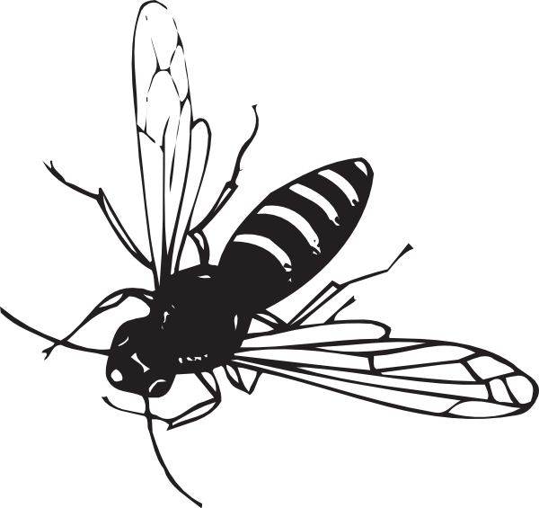 Fly clipart winged insect. Bee flying clip art