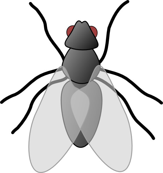 Fly clip art panda. Wing clipart bug