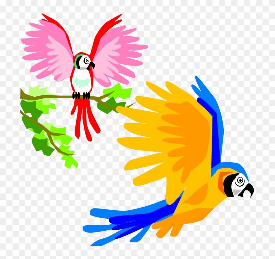 Parrot clipart colorful parrot. Tropical birds flying