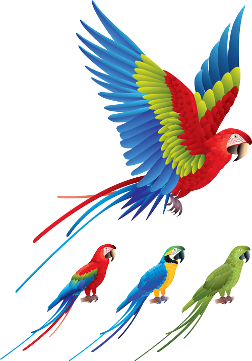 Red and green macaw. Parrot clipart bird fly