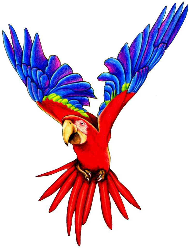 Flying png pic peoplepng. Parrot clipart rainforest parrot