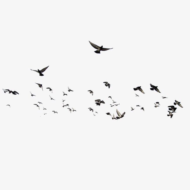 Birds bird migration png. Flying clipart tiny