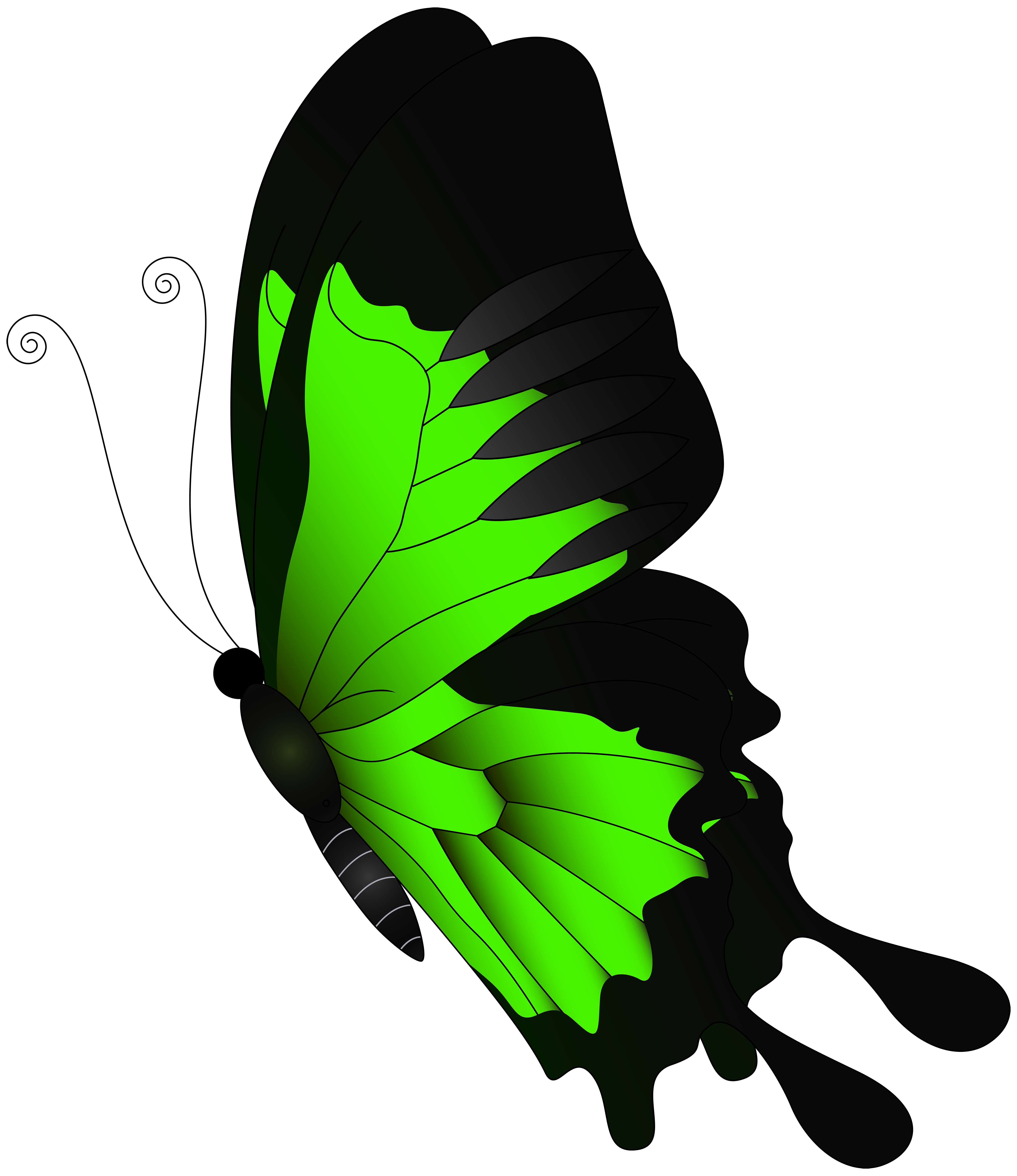 Green butterfly png clip. Flying clipart vaction