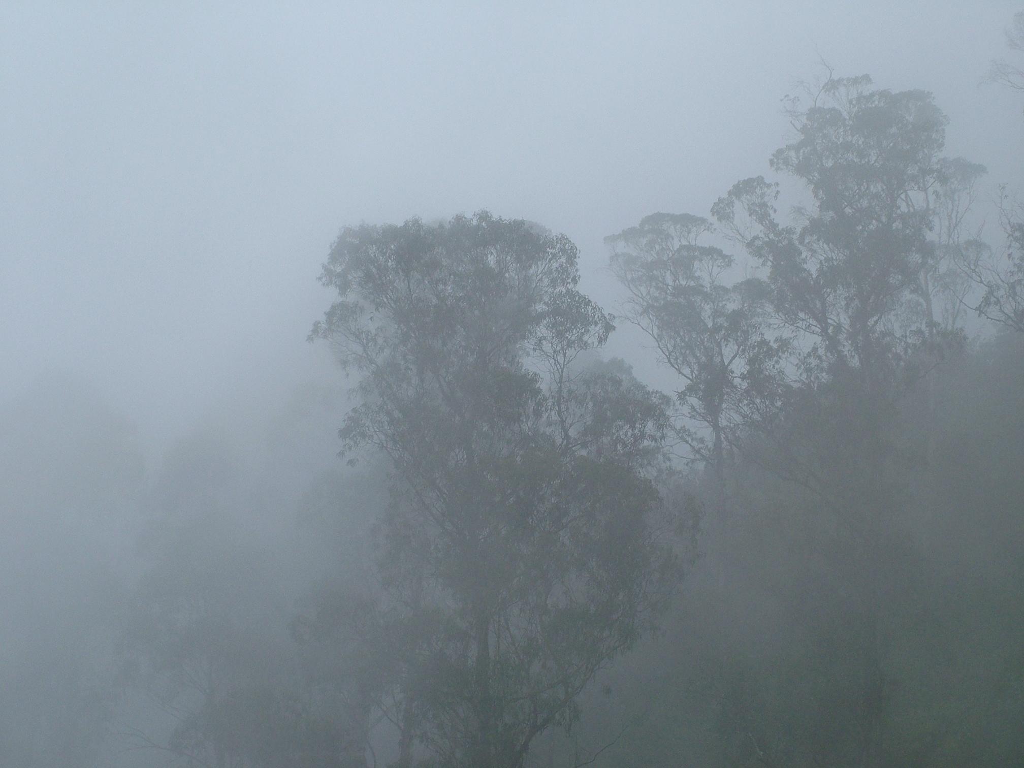 Fog Clipart Fog Transparent Free For Download On