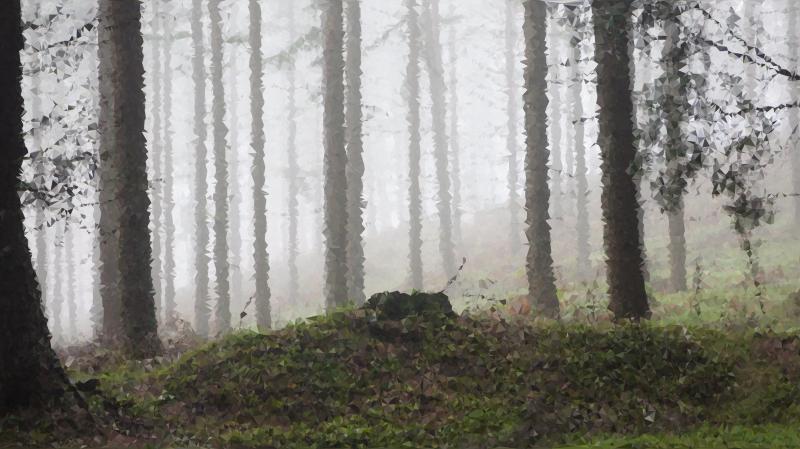 High poly enshrouded medium. Fog clipart forest