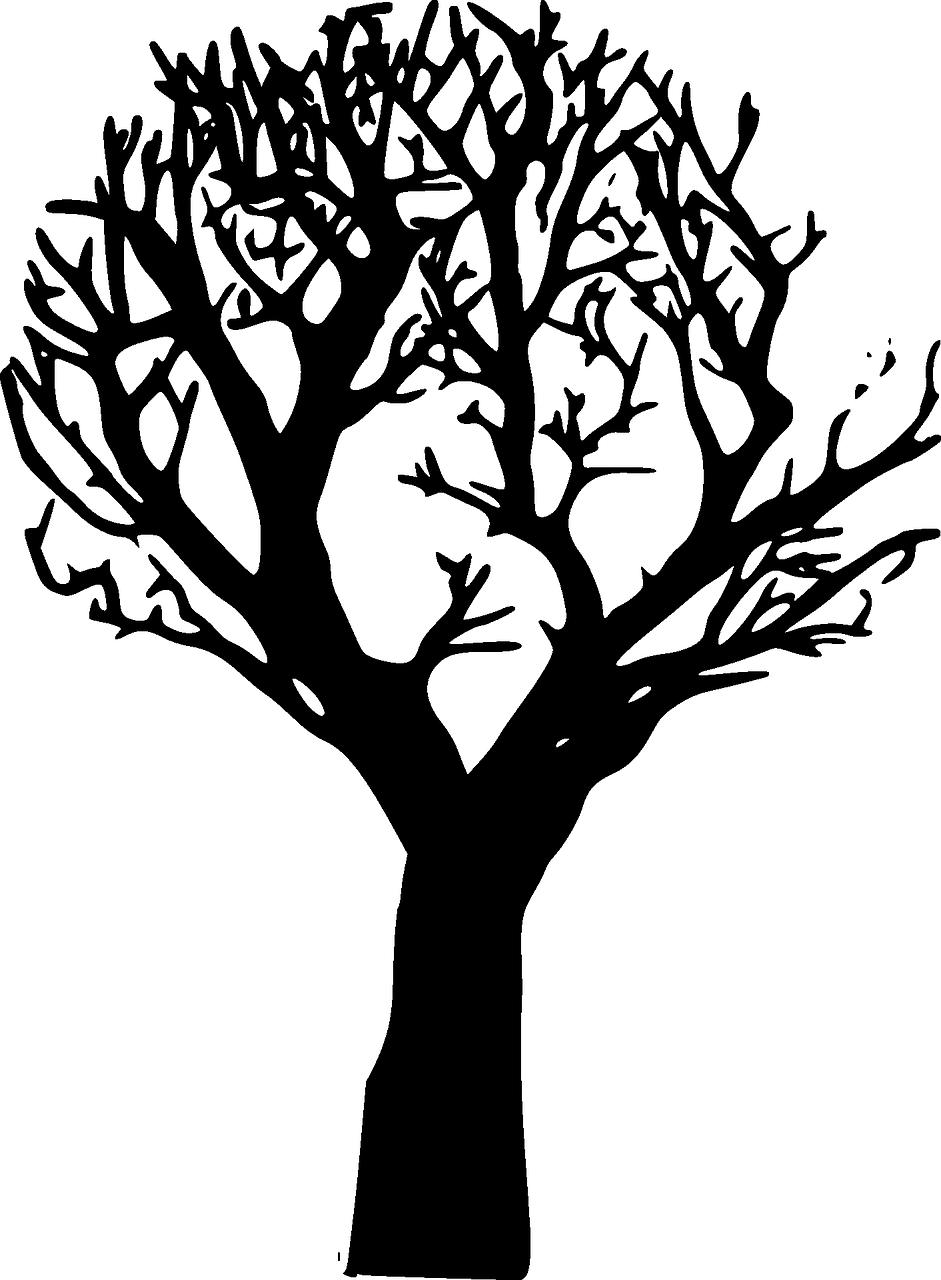 Fog clipart forest.  pixabay