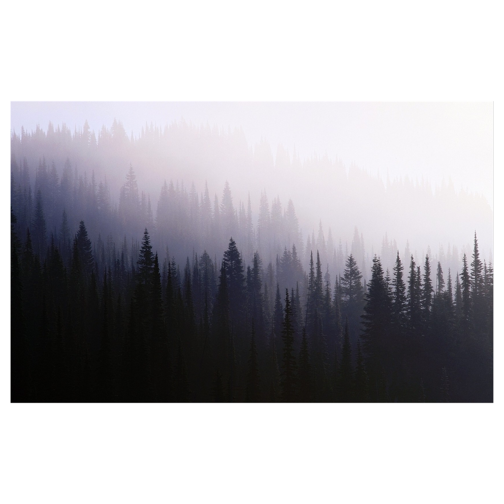 Fog clipart forest. Ftestickers freetoedit