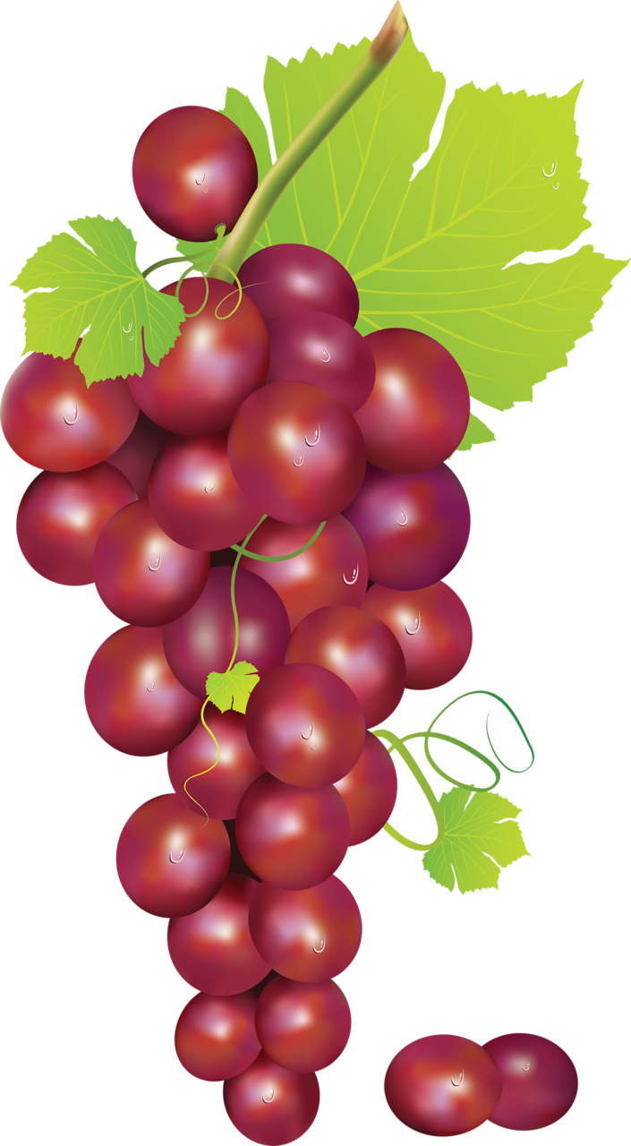 Foods clipart agriculture. Grape png pinterest clip