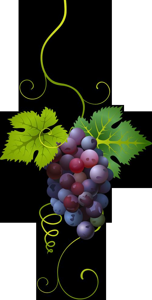 Mis laminas para decoupage. Food clipart grape
