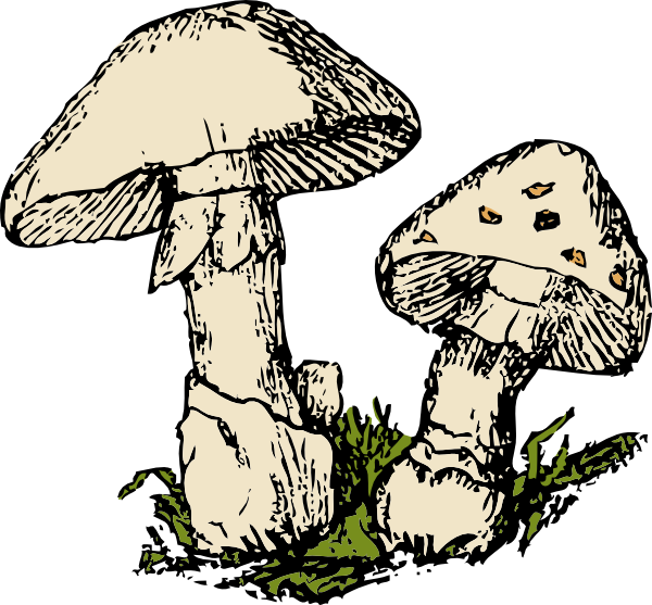 Two clip art at. Mushrooms clipart mushroom plant