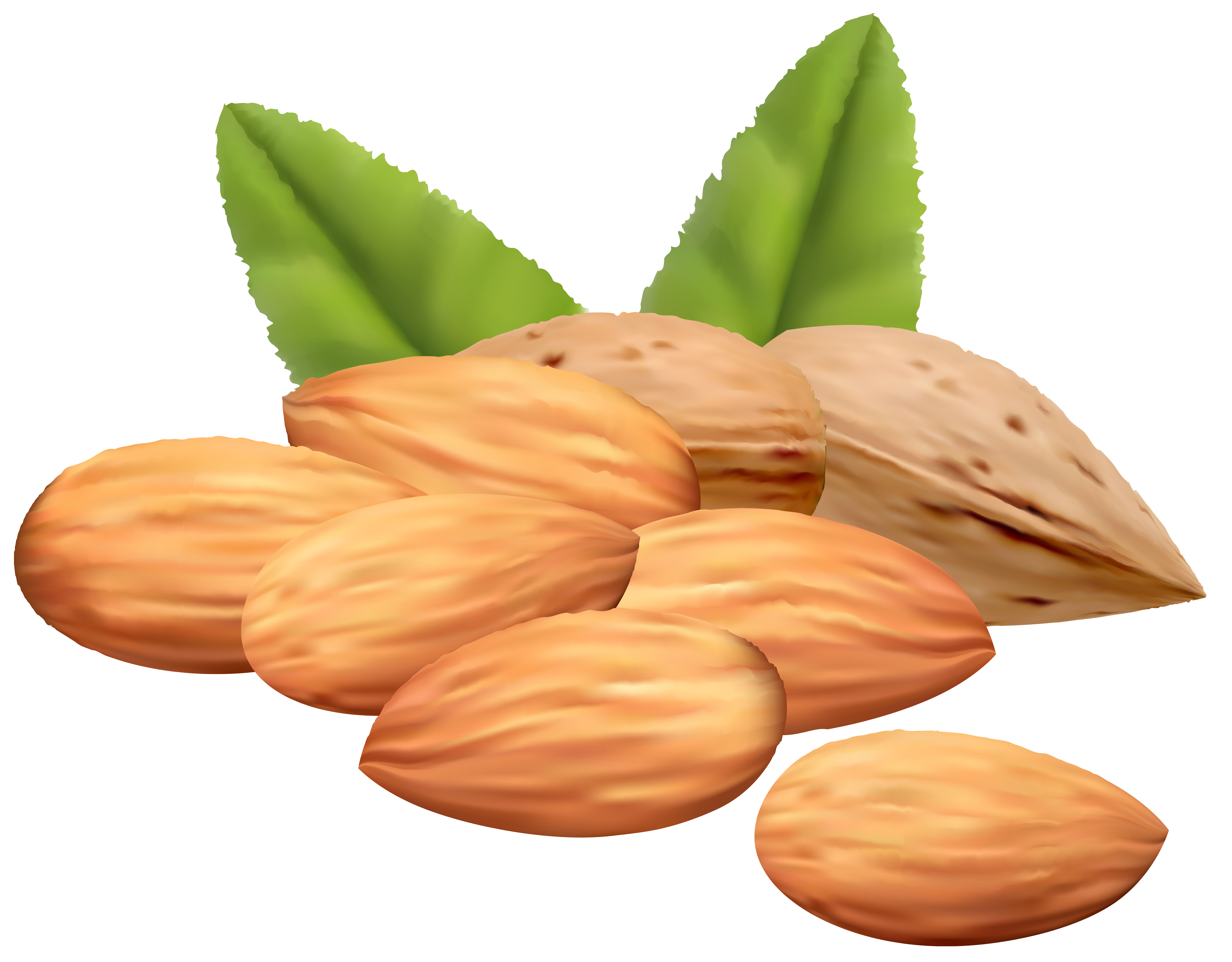 Almond nuts png image. Nut clipart hindi