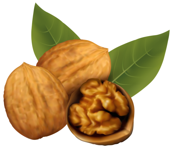 Nut clipart leave. Walnuts png image pinterest