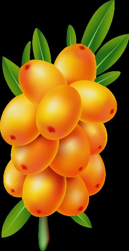 pear clipart nashpati #136172611