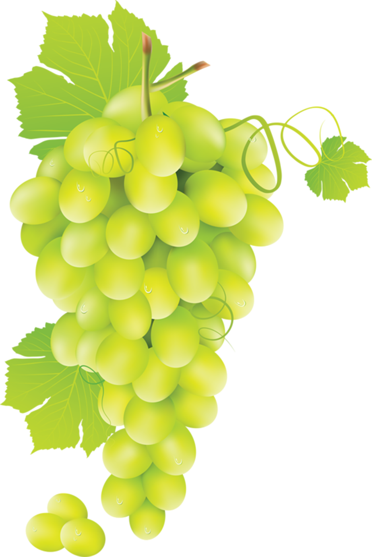 Grape clipart fruit individual. Pin by jadwiga on
