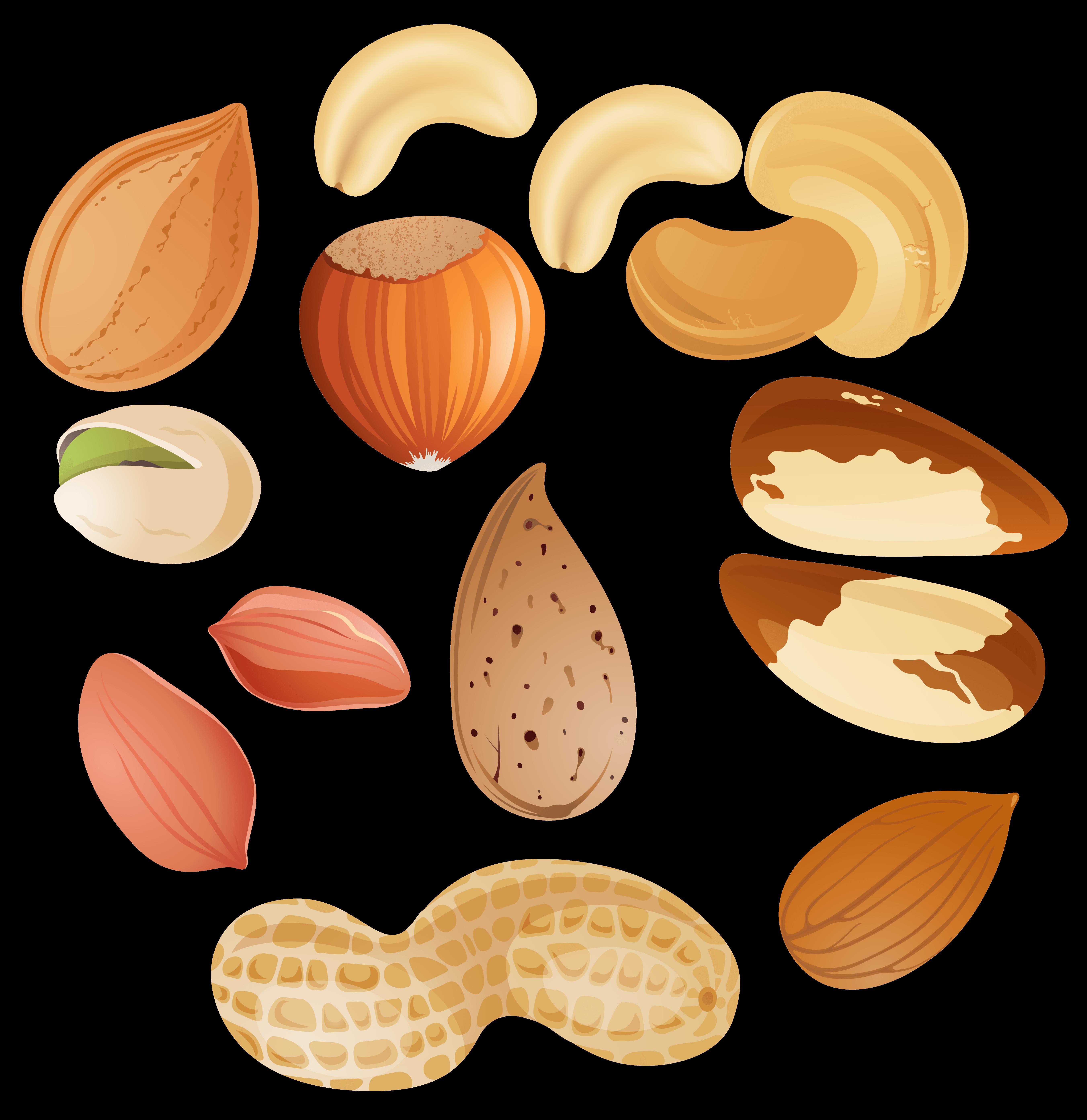 grains clipart nuts