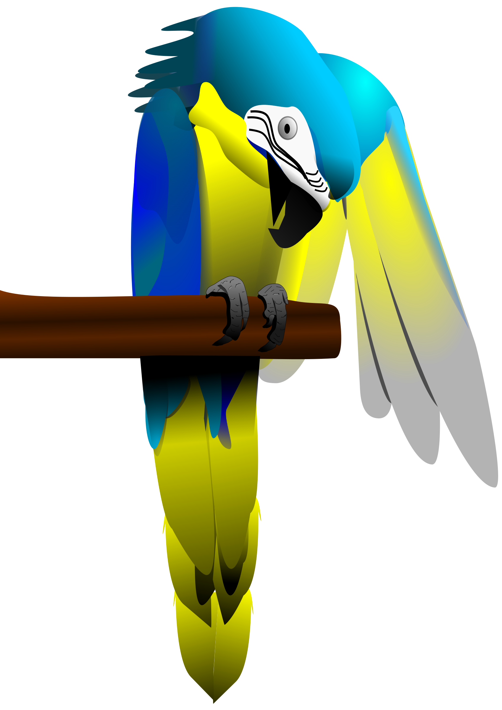 Blue and Yellow Macaw Parrot Icons PNG