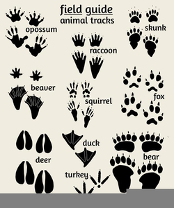 Footprints clipart alligator. Tracks free images at