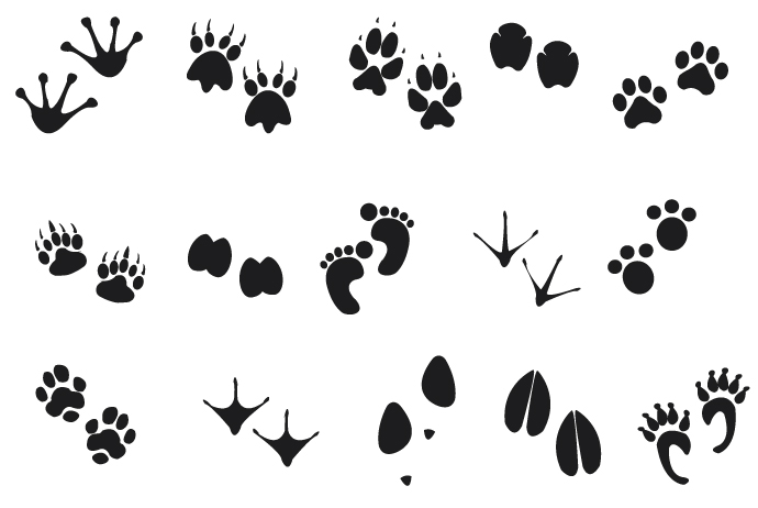 Free tracks cliparts download. Footprint clipart animal