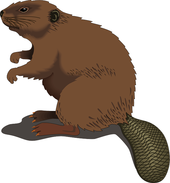 groundhog clipart realistic