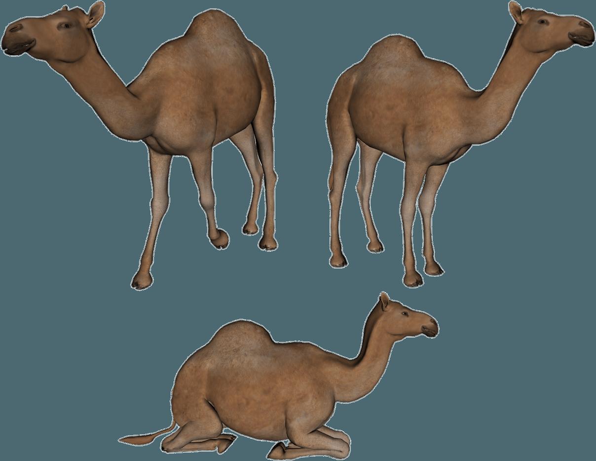 Footprint clipart camel. Download png image hq