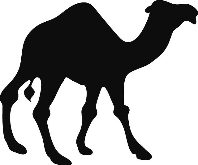 Footprint clipart camel. Image gratuite sur pixabay