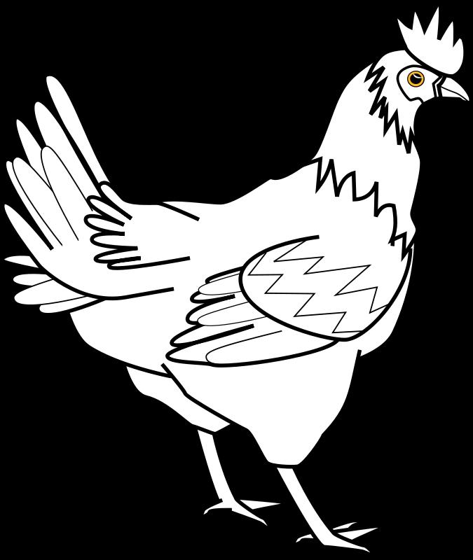 Hen clipart thin. Free chicken line art