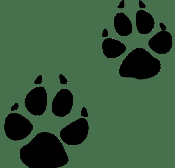 Bobcat gallery by amanda. Footprint clipart cute