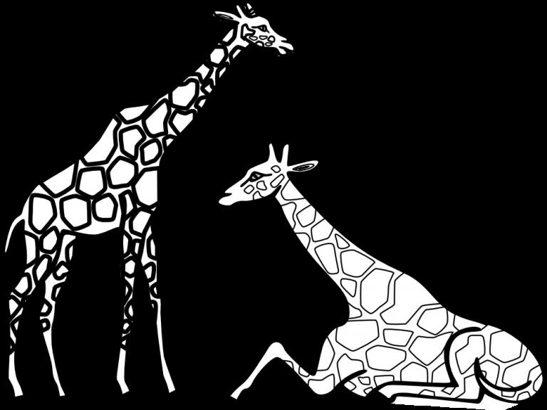 Black and white panda. Footprint clipart giraffe