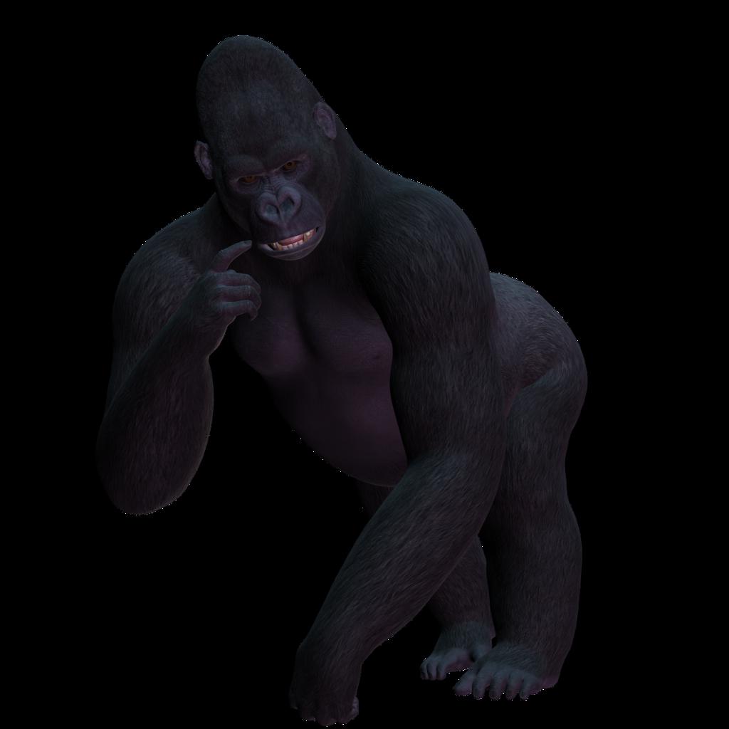 Gorilla female gorilla