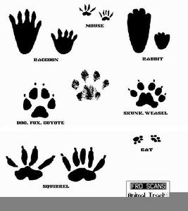 Footprint clipart lizard. Footprints free images at