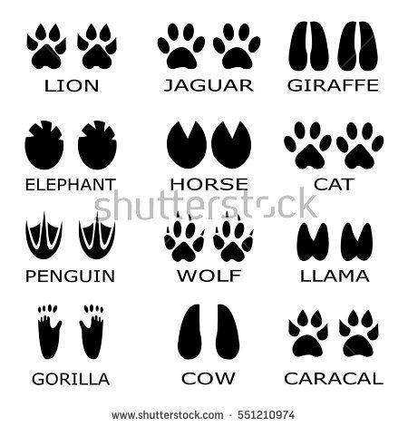 Footprint clipart llama. Image result for animal