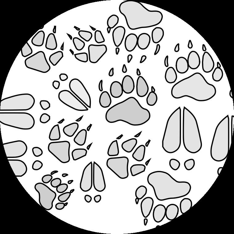 Fossils gr cuz i. Footprint clipart polar bear