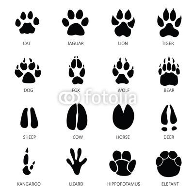 Footprint clipart sheep. Animals footprints stock images