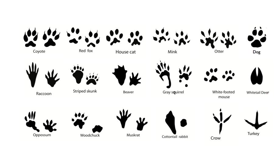 Cartoon footprint animal dog. Footprints clipart squirrel