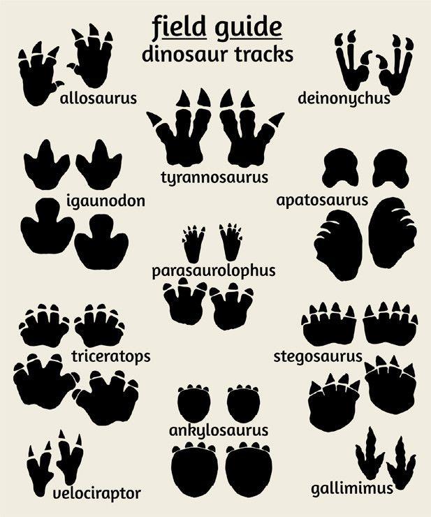 Footprints clipart triceratop. Dinosaur tracks poster field
