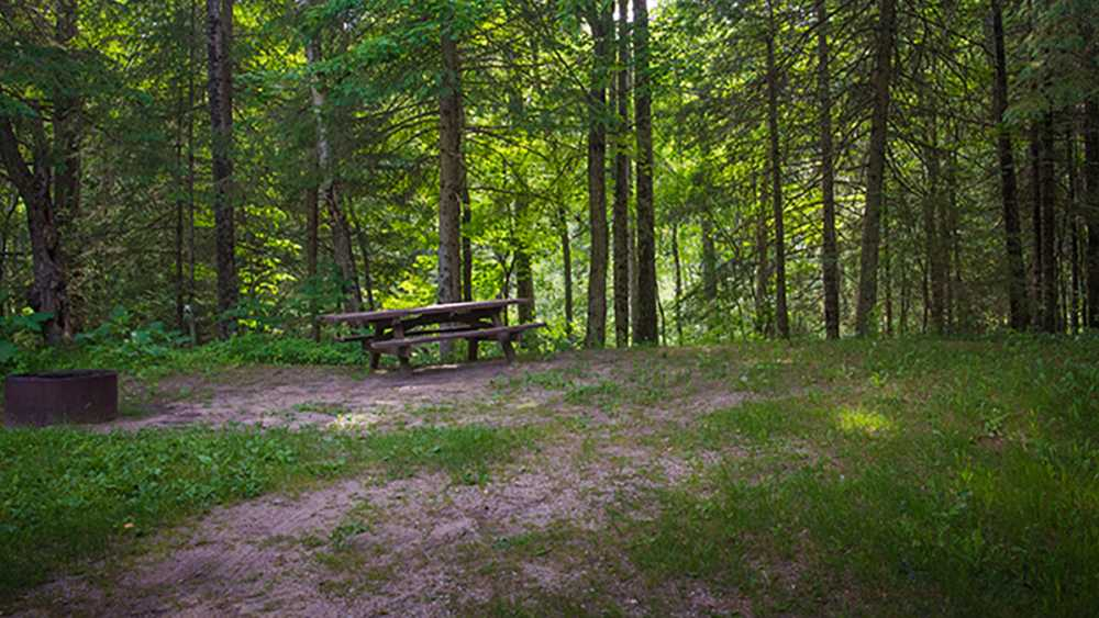 Forest Campsite. Black river state campground