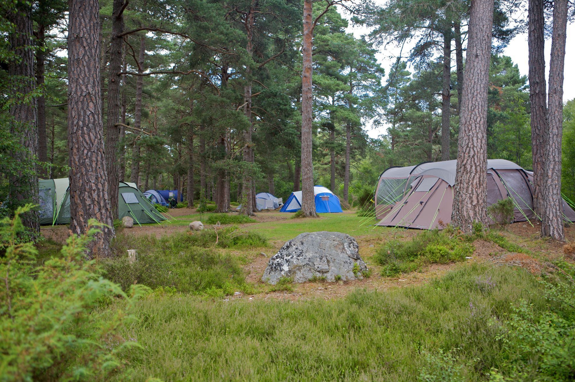 Forest Campsite. The best woodland campsites