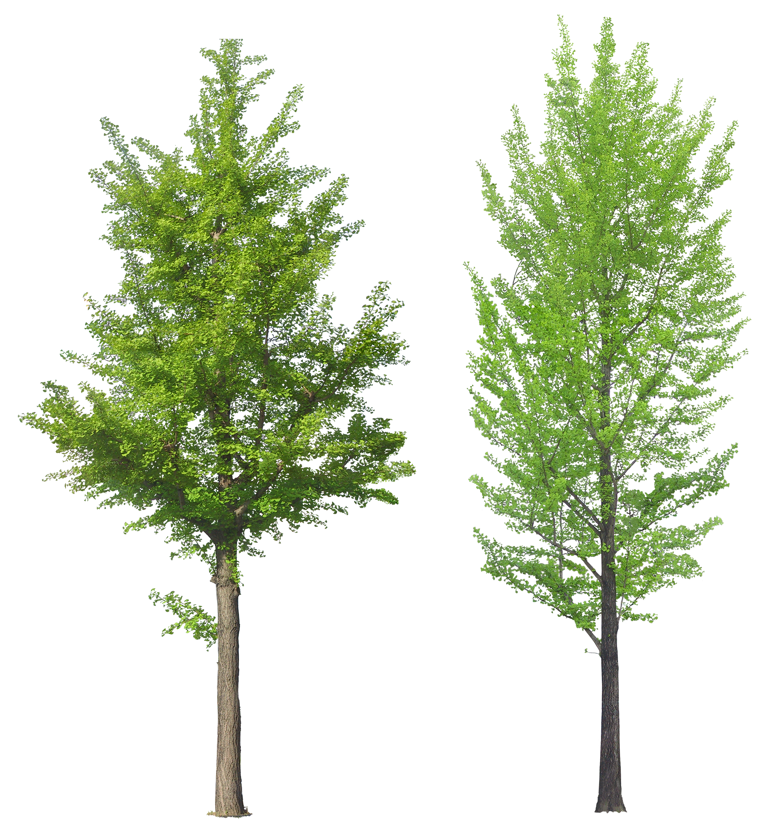 Tree sixteen isolated stock. Trees png images