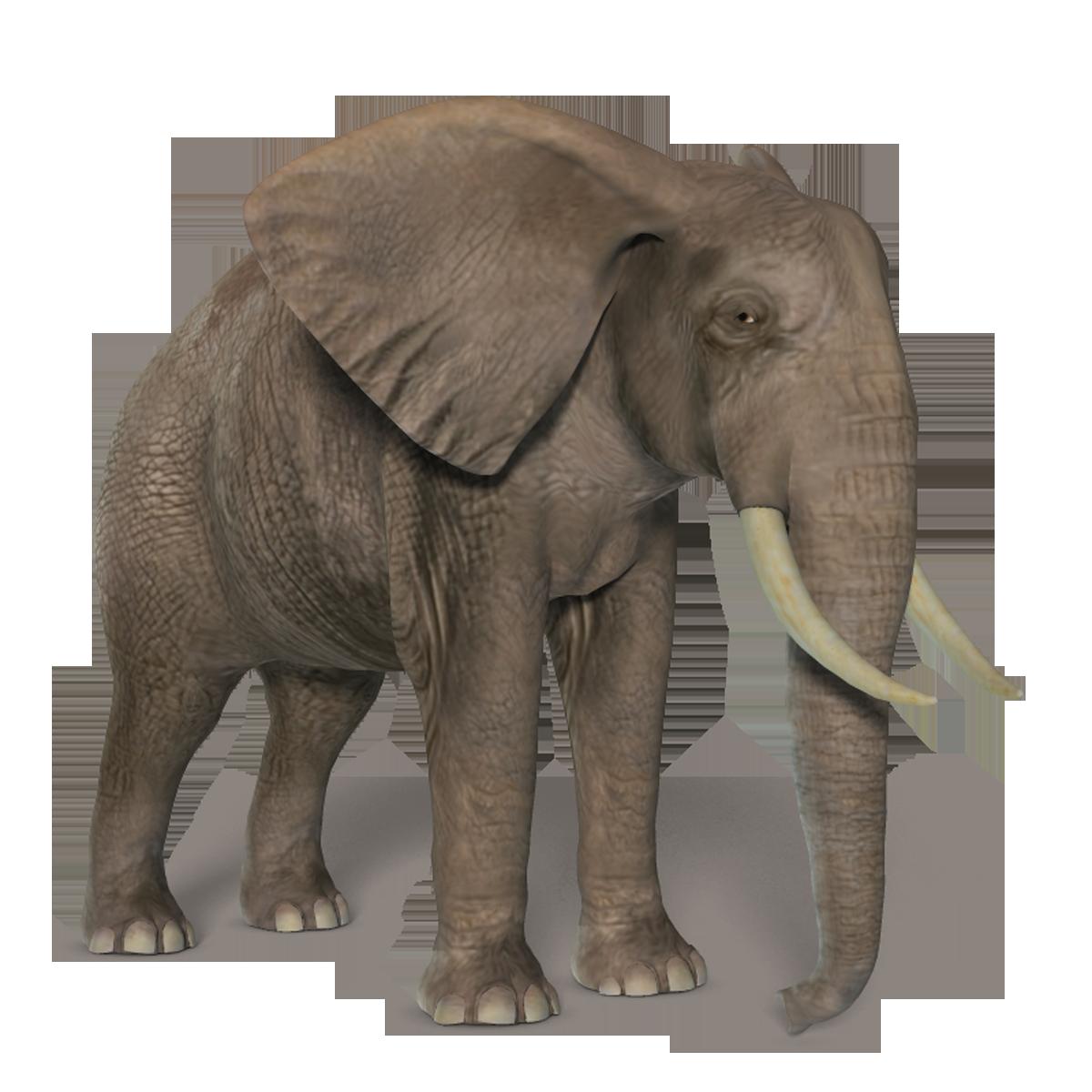 Elephants png images free. Name clipart elephant