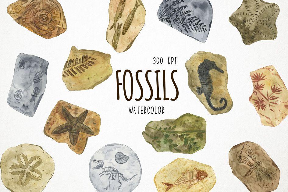 Watercolor fossils cli design. Fossil clipart
