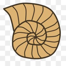 Fossil clipart. Seashell snail gastropod shell