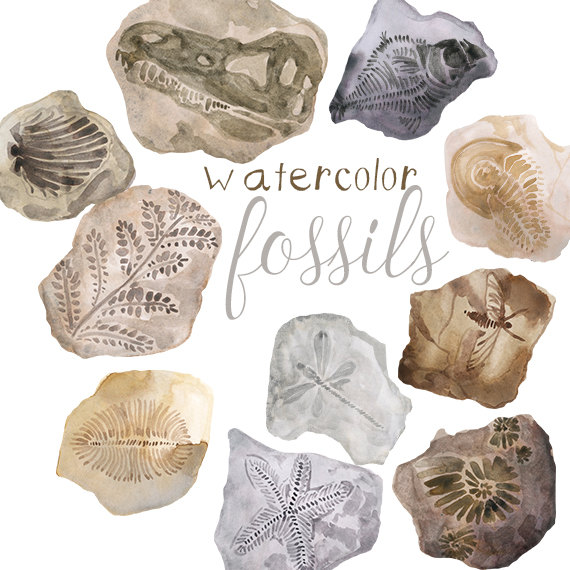 Watercolor fossils clip art. Fossil clipart